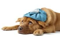 11 maggio Corso di PRIMO SOCCORSO e CURA del cane